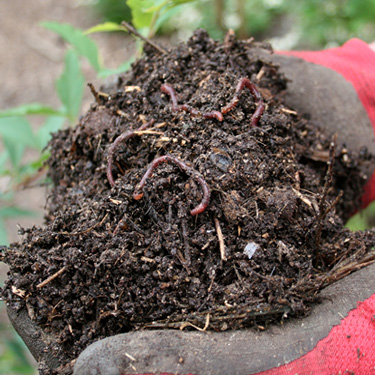 Build and improve your soil