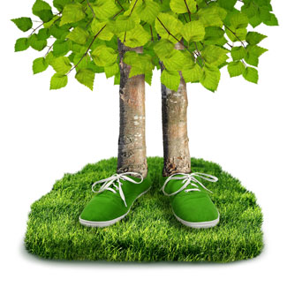 Reduce your footprint - plant your backyard