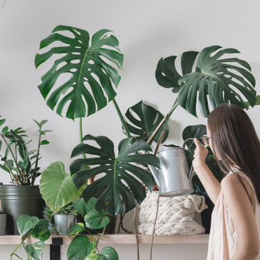 Life inside - success with houseplants
