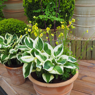 Plants for summer pots