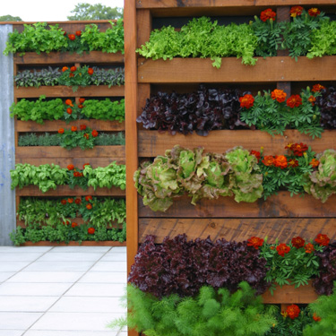 Upward trends - create a vertical garden